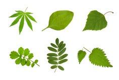 Plantas médicas Foto de archivo libre de regalías