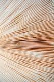 Plantas macro do cogumelo de Sajor-caju do fundo abstrato da natureza O uso de ideias do projeto texture o papel de parede natura fotografia de stock