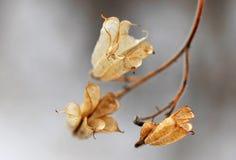Plantas marchitadas hermosas de las flores en el invernadero Fotografía de archivo libre de regalías