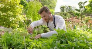 Plantas masculinas del ajuste del jardinero almacen de metraje de vídeo