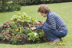 Plantas mayores felices de señora Taking Care Of Her Imagen de archivo libre de regalías