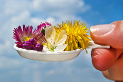 Plantas medicinais. Fotografia de Stock Royalty Free