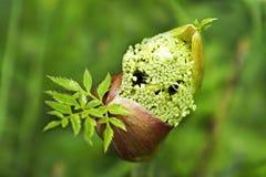 Plantas medicinales. Fotografía de archivo