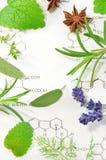 Plantas medicinales foto de archivo libre de regalías