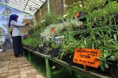Plantas medicinales foto de archivo
