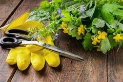 Plantas medicinales recién cosechadas imagenes de archivo