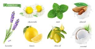 Plantas medicinales y sabores, manzanilla, menta, lavanda, limón, almendras, coco, aceite de oliva sistema del icono del vector 3 stock de ilustración
