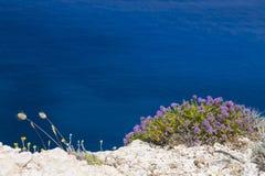 Plantas mediterráneas en fondo del agua azul Imagen de archivo libre de regalías