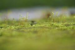 Plantas minúsculas en Sri Lanka Imagenes de archivo