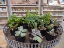 Plantas minúsculas para a loja das artes da venda in fine foto de stock