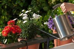 Plantas molhando Fotografia de Stock Royalty Free