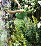 Plantas molhando imagem de stock