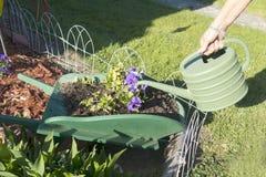 Plantas molhando Foto de Stock