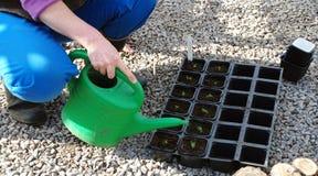 Plantas molhando Imagem de Stock Royalty Free