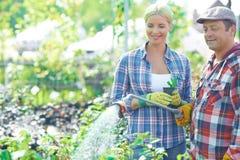 Plantas molhando fotos de stock royalty free
