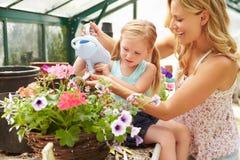 Plantas molhando da mãe e da filha na estufa Fotografia de Stock