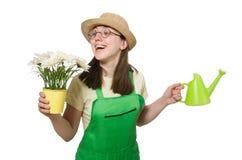Plantas molhando da menina Fotos de Stock