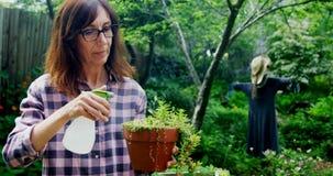 Plantas molhando da mulher madura no jardim 4k vídeos de arquivo
