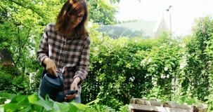 Plantas molhando da mulher madura no jardim 4k video estoque