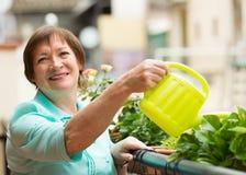 Plantas molhando da mulher no balcão foto de stock royalty free