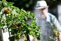 Plantas molhando de homem superior com uma mangueira imagens de stock royalty free