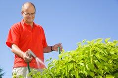 Plantas molhando do homem de meia idade fotografia de stock