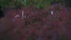 Plantas molhando no jardim video estoque