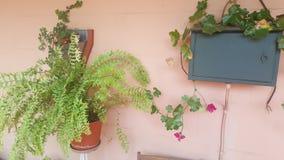 Plantas montadas en la pared y decoración del DB Imagen de archivo