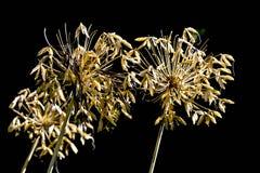 Plantas muertas Fotografía de archivo