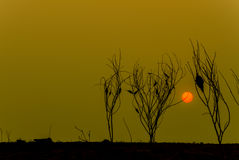 Plantas muertas con el fondo de la puesta del sol Foto de archivo