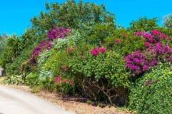 Plantas multicoloras en una calle del país Fotografía de archivo