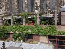 Plantas na água de Colônia imagens de stock royalty free