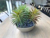 Plantas na biblioteca Imagens de Stock Royalty Free