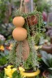 Plantas na cesta de suspensão no berçário Imagem de Stock Royalty Free