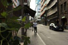 Plantas na cidade imagens de stock royalty free