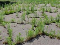 Plantas na estrada Fotografia de Stock Royalty Free
