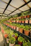 Plantas na exploração agrícola de Kadoorie em Hong Kong foto de stock