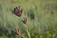 Plantas na natureza - África do Sul imagem de stock