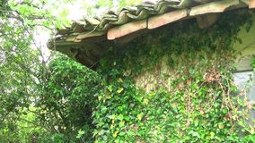 Plantas na parede e no telhado do telhado da casa velha filme