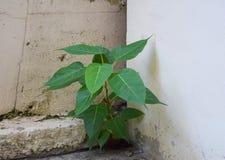 Plantas na parede suja Foto de Stock Royalty Free