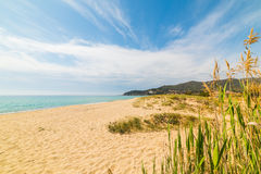 Plantas na praia de Solanas Fotografia de Stock Royalty Free