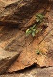 Plantas nas rochas Imagem de Stock Royalty Free