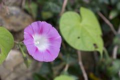 Plantas nativas de Slak Imagem de Stock