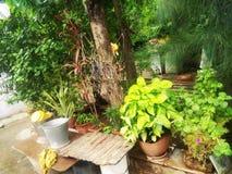 Plantas naturais imagens de stock