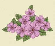 Plantas naturales de las flores con las hojas y los pétalos libre illustration