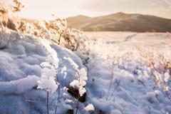 Plantas nevadas en la montaña Fotos de archivo libres de regalías
