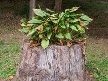 Plantas no coto de árvore Foto de Stock Royalty Free