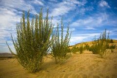 Plantas no deserto imagens de stock