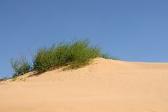 plantas no deserto imagens de stock royalty free