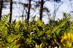 Plantas no dia de mola ensolarado Imagens de Stock Royalty Free